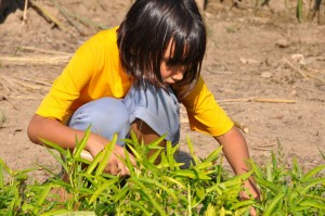 Panyaden School primary student self-directed project: growing vegetables