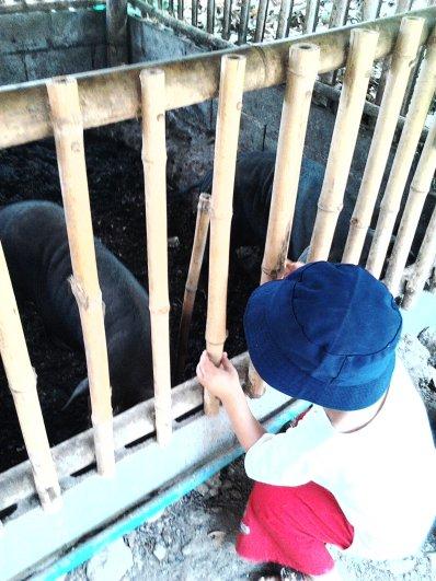 img20130409005 Student at Panyaden School pig farm, Chiang Mai