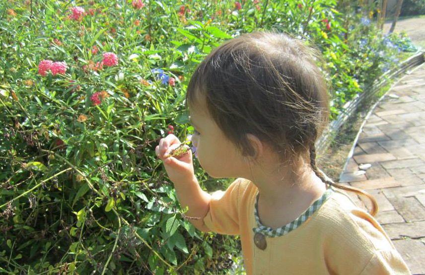 Kindergarten student enthralled by flower, Panyaden School