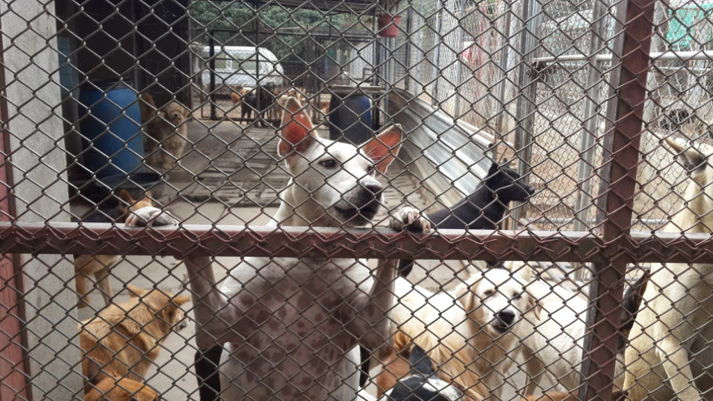 Rescued dogs at Santisook Dog & Cat Rescue center, photo by Panyaden School