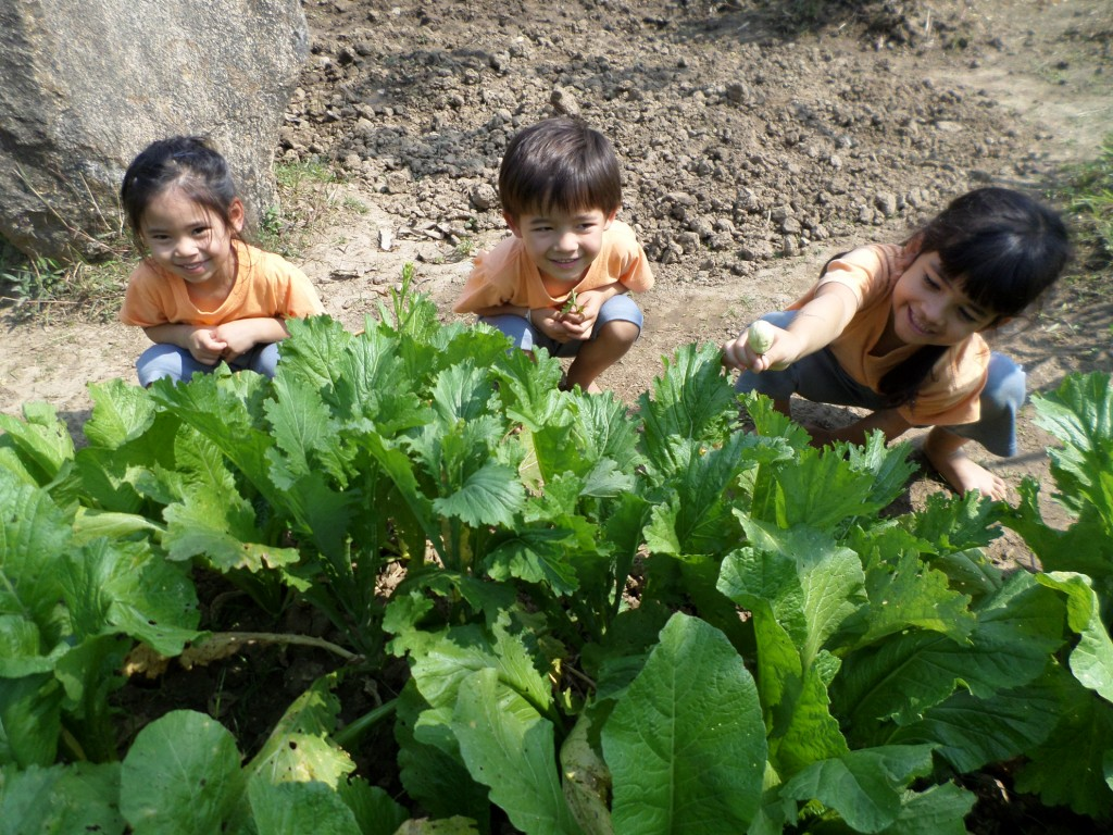 Organic vegetables grown by students at green school in Chiang Mai, Panyaden School