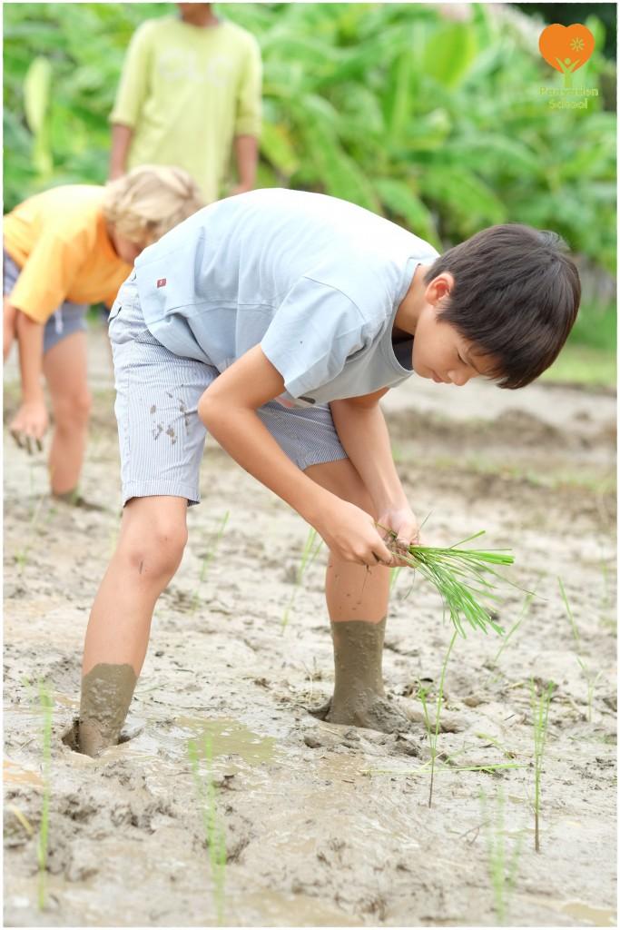 DSCF9072 Mother's Day rice planting at Panyaden School