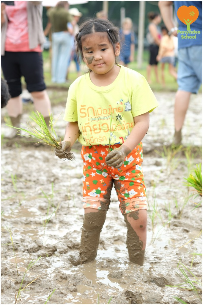 DSCF9130 Mother's Day rice planting at Panyaden School
