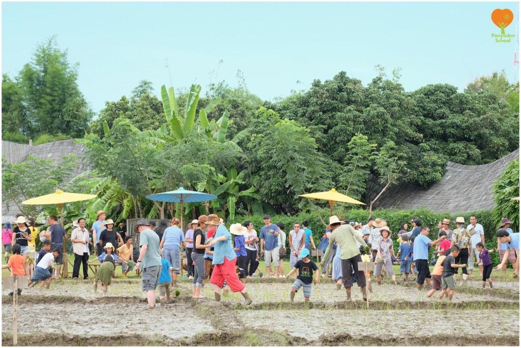 DSCF9137 Panyaden School community rice planting for Mother's Day in Thailand