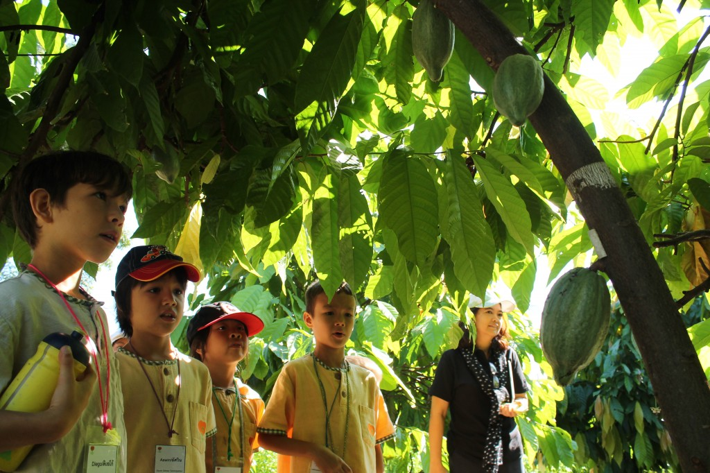 IMG_1855 Panyaden P2 students visit a cacao orchard in Chiang Mai