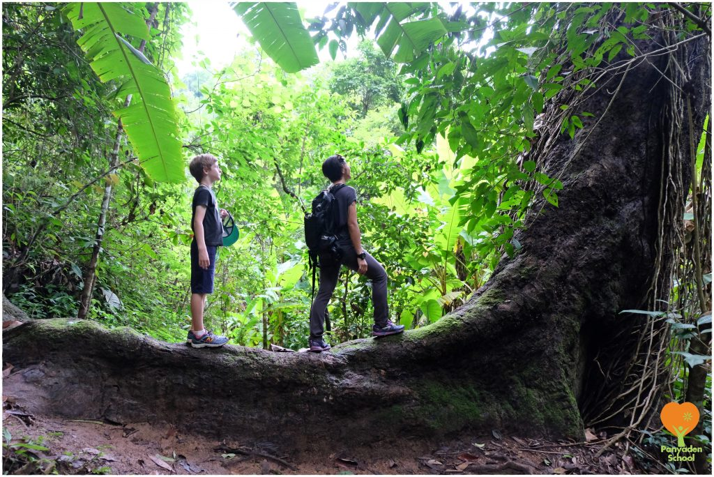 DSCF4098 Admiring the forest, Panyaden School