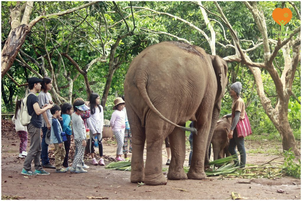 _MG_0030 Gentle giants - Panyaden Prathom students at elephant sanctuary in Chiang Mai