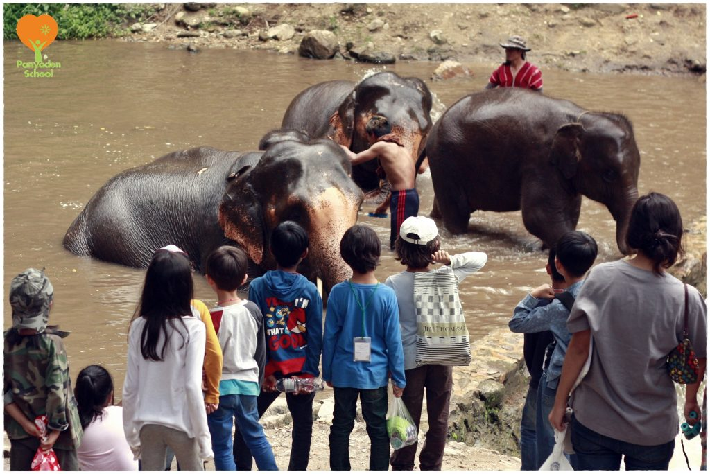_MG_0106 Bath time for the elephants! Panyaden International School grade 1 students at Hang Dong (Chiang Mai) elephant sanctuary