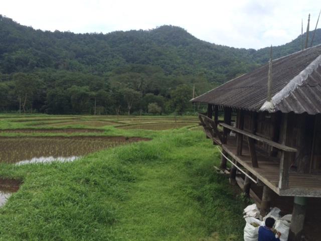 IMG_9459 Rice planting at Mae Taeng organic farm for Panyaden International School