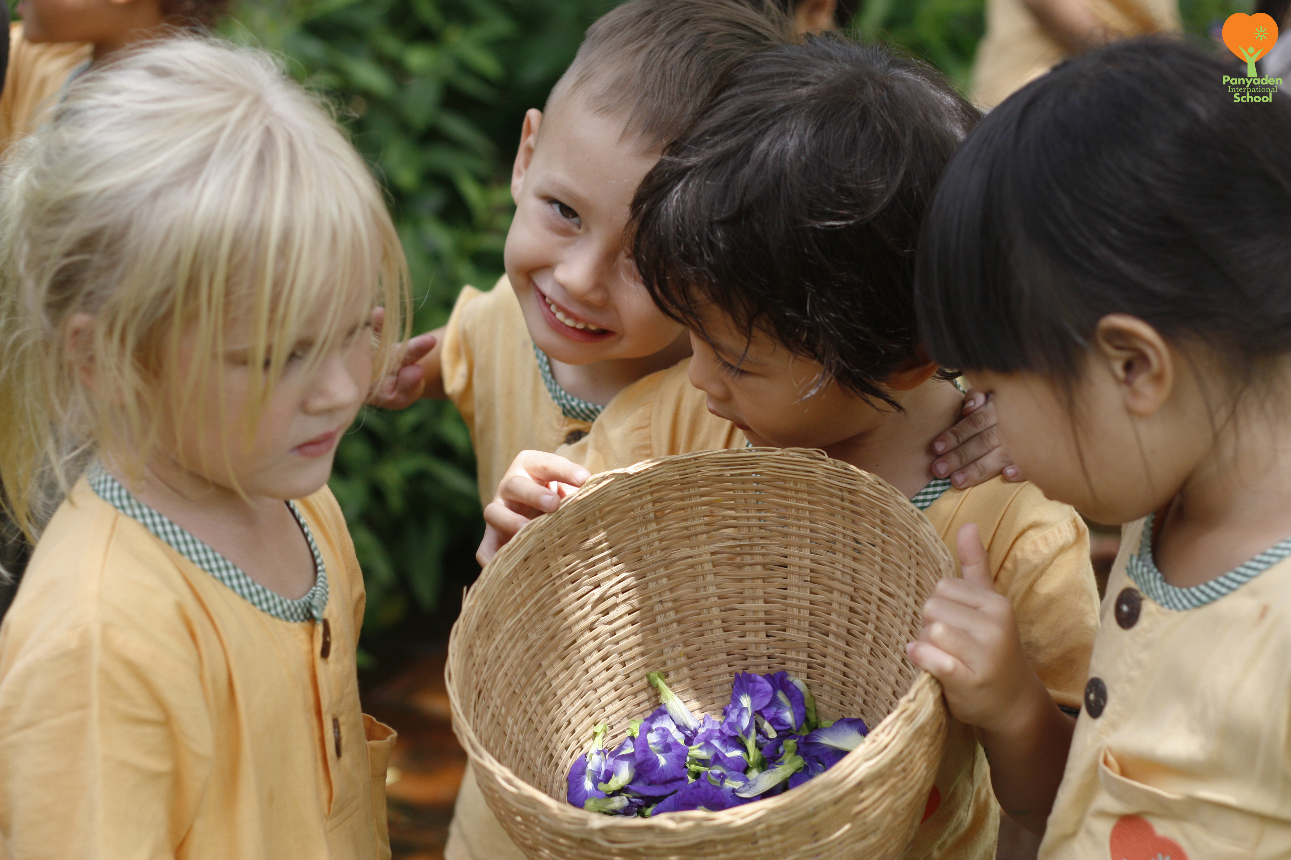 Panyaden International School kindergarten 2 students picking butterfly pea flowers to make natural dyes for painting