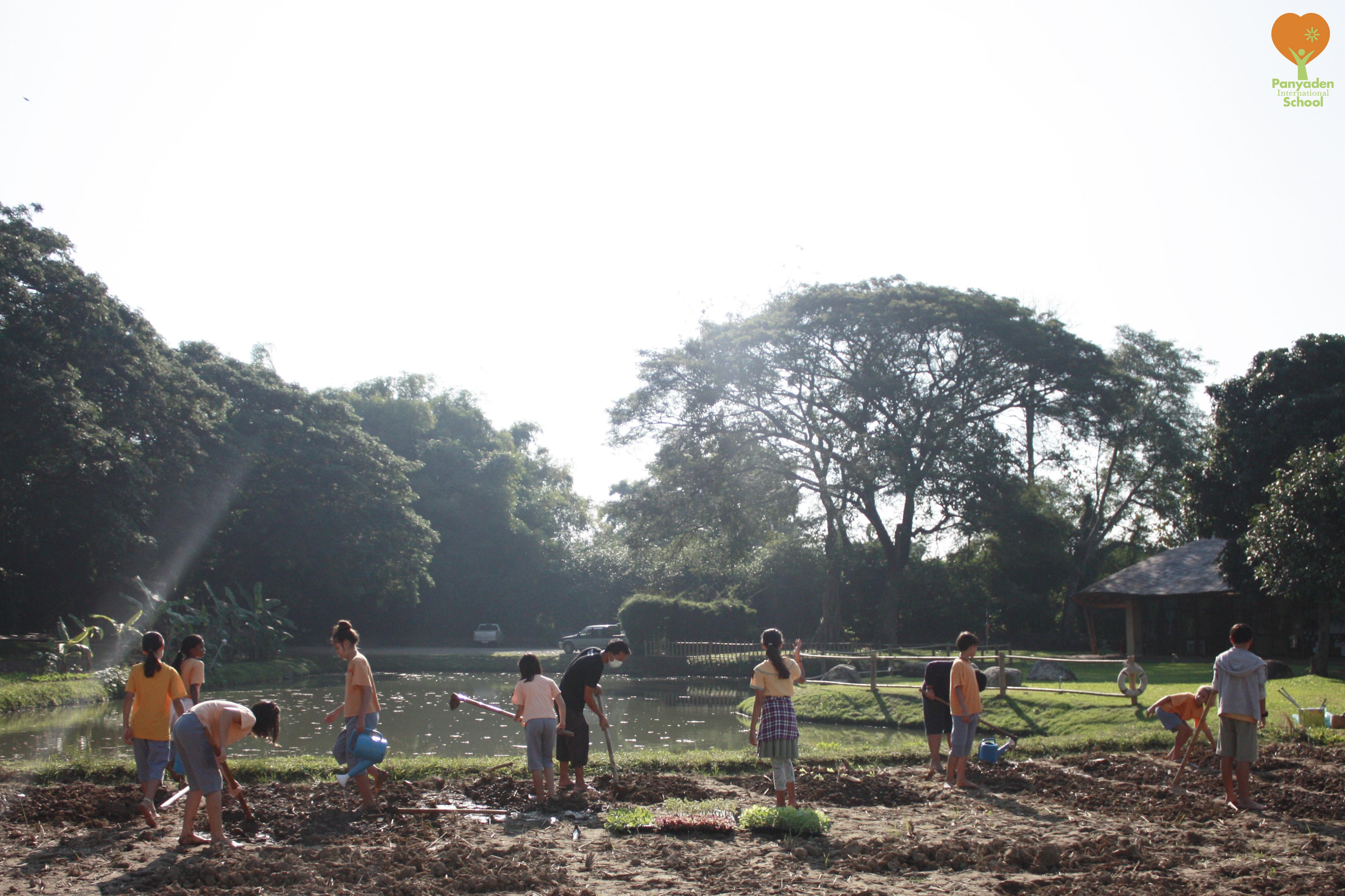 Panyaden Life Skills Year 6:7 primary students planting vegetables