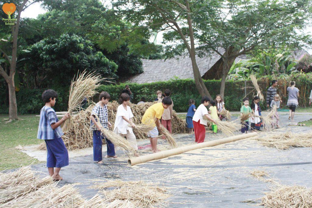 Rice threshing, Panyaden International School