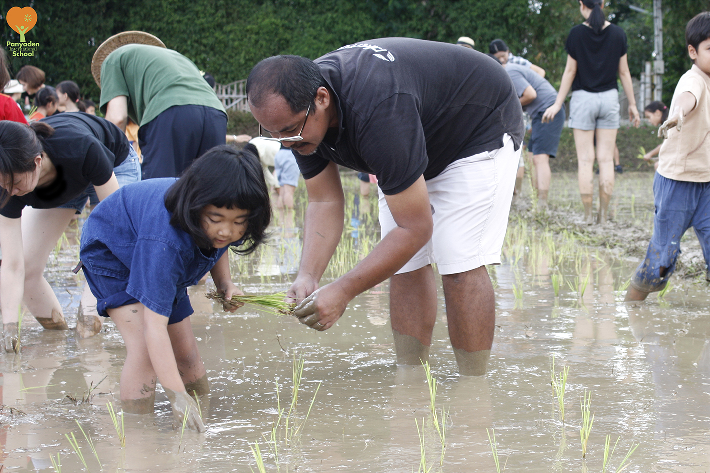Father and daughter planting rice, Panyaden Rice Planting Day