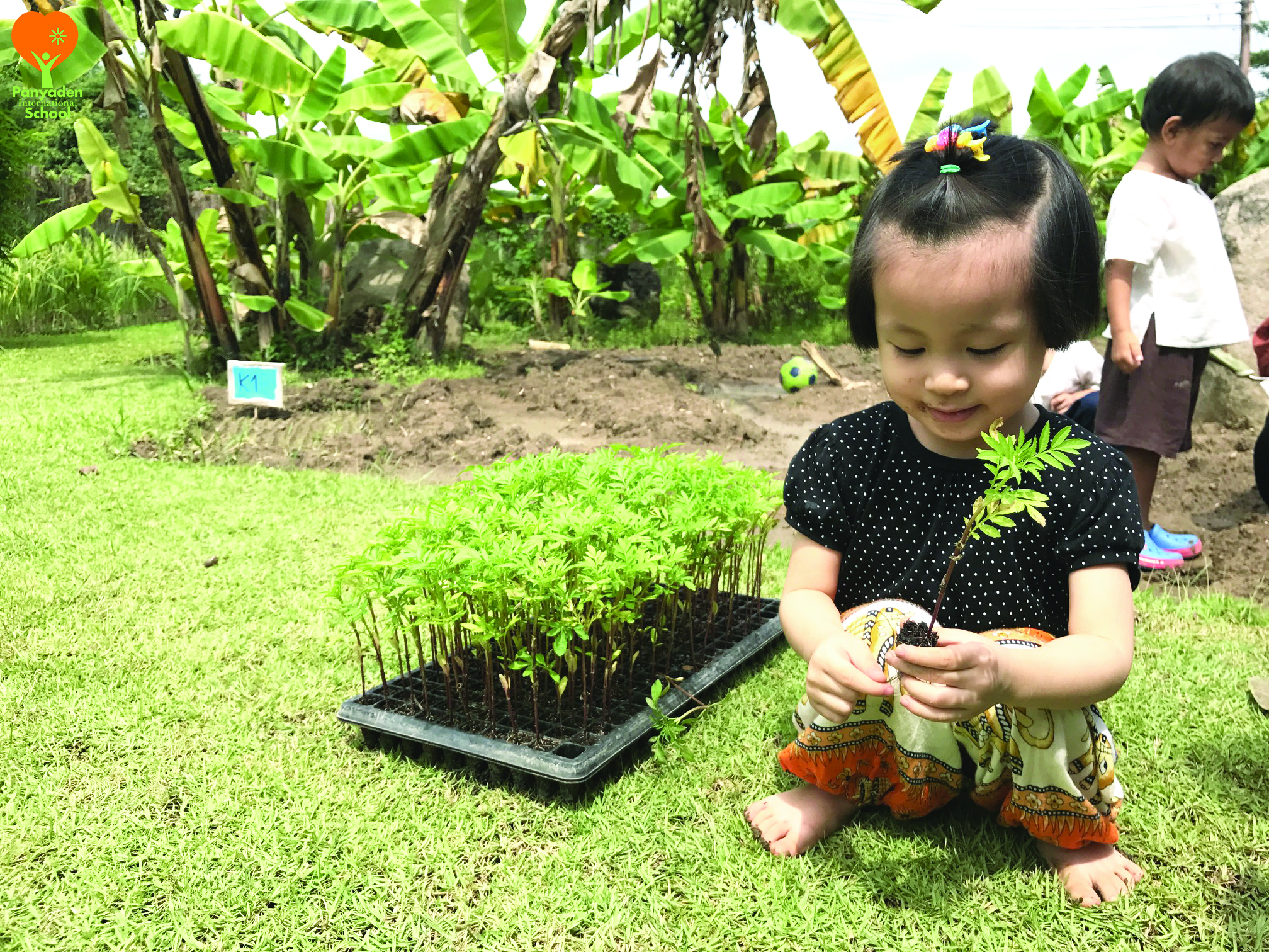 Panyaden Kindergarten 1 planting marigold flowers as a tribute to King Rama IX