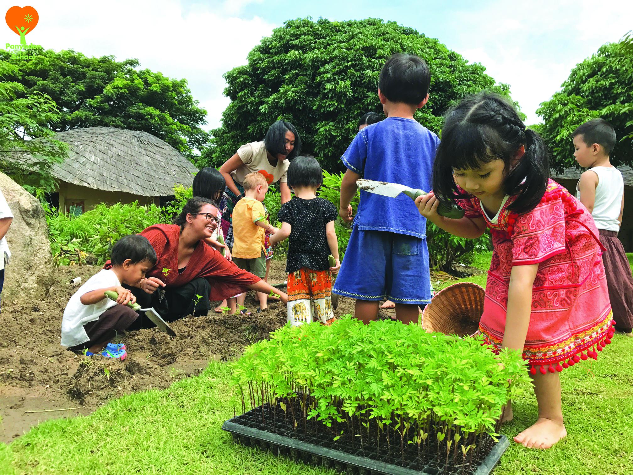 Panyaden Kindergarten 1 plant marigold flowers as a tribute to King Rama IX