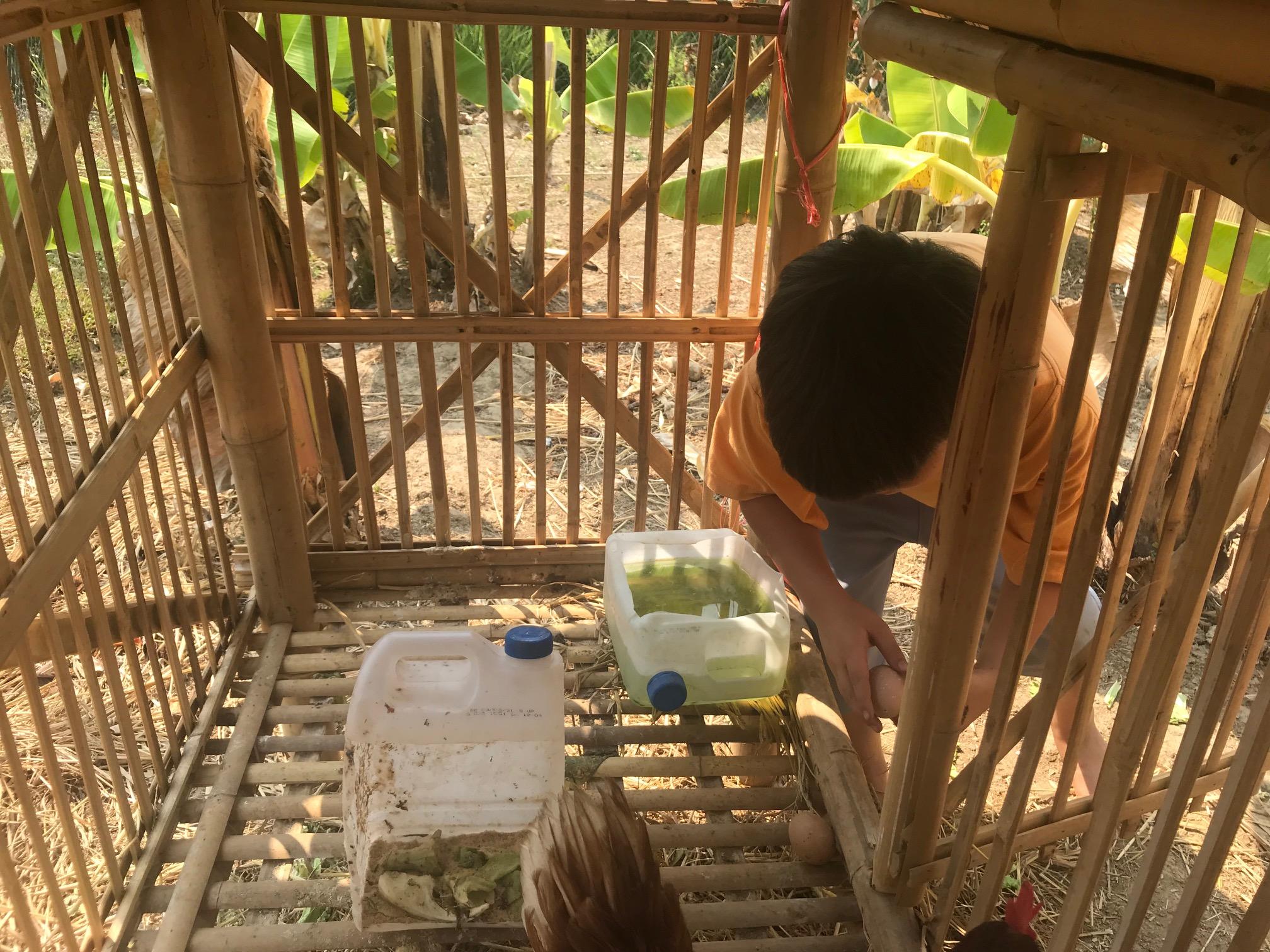 Panyaden student collecting eggs at school