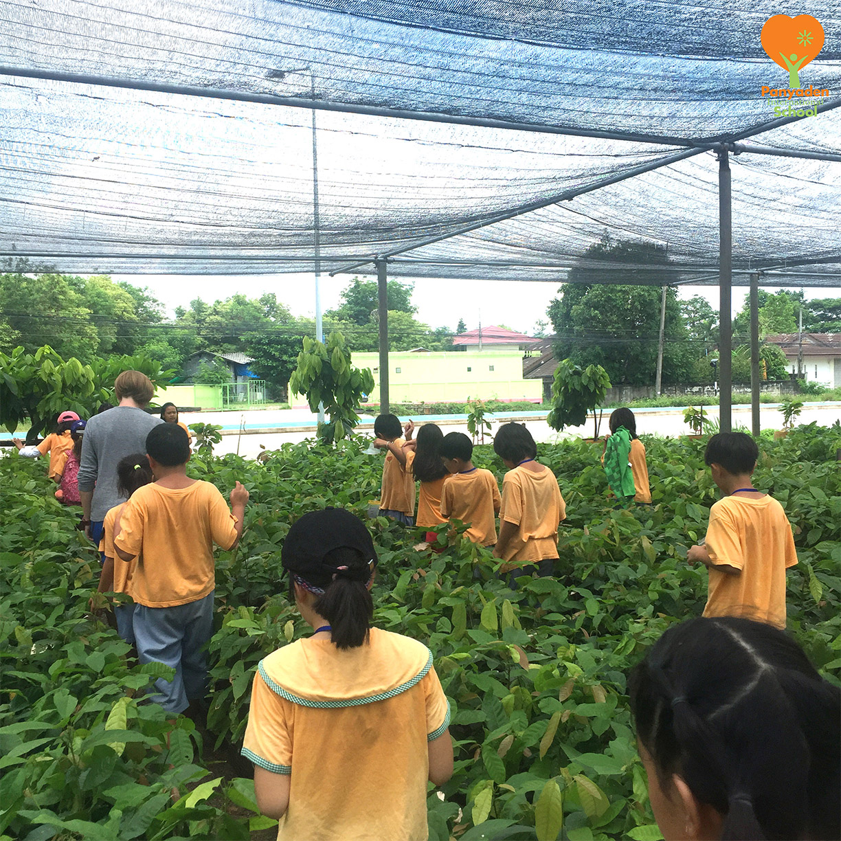 Panyaden Year 4 visit cacao farm to learn about cacao plants and chocolate